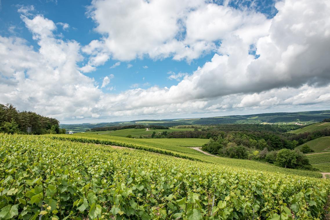 Vignes Les Riceys - CDT Aube.jpg