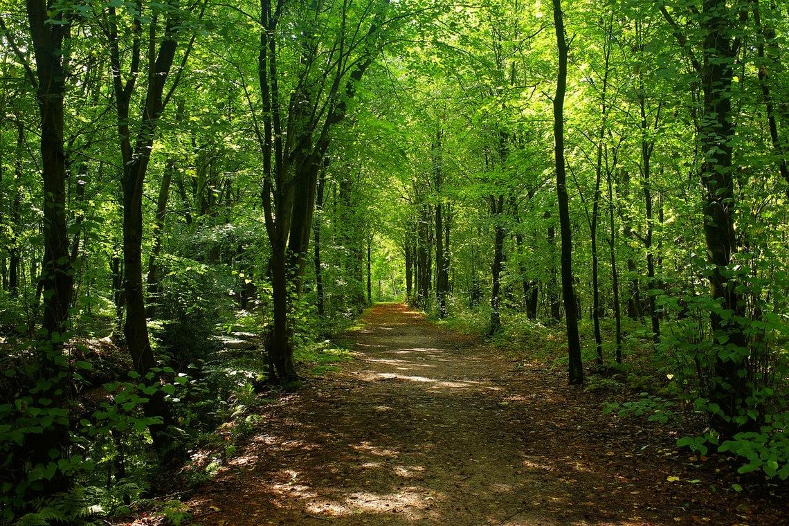 forest-2735623_1280.jpg