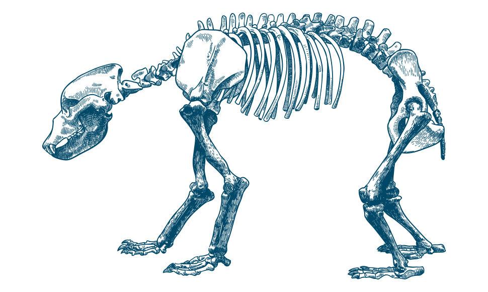 11.06.2021 conférence Hommes et ours, une histoire préhistorique.jpg