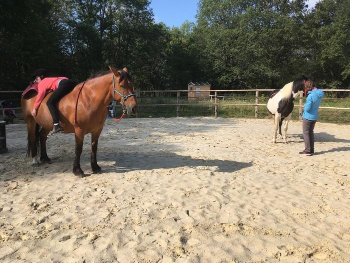 Atelier_a_la_rencontre_de_letre_Cheval_qui_es_tu_Ferme_equestre_naturelle_Les_Grillaults_La_Roche_Posay.jpg