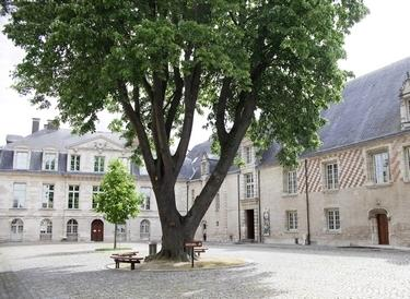 MAMCourArbre (c) A. Clergeot - Ville de Troyes (2).jpg