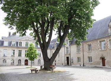MAMCourArbre (c) A. Clergeot - Ville de Troyes (2).jpg