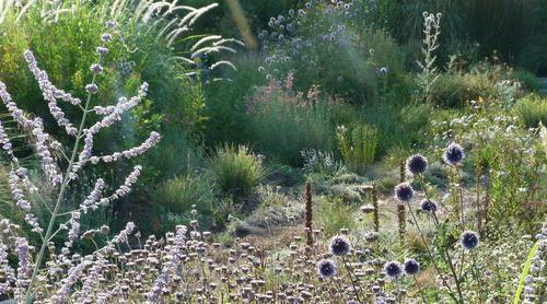 jardin champêtre caunes mvois.jpg