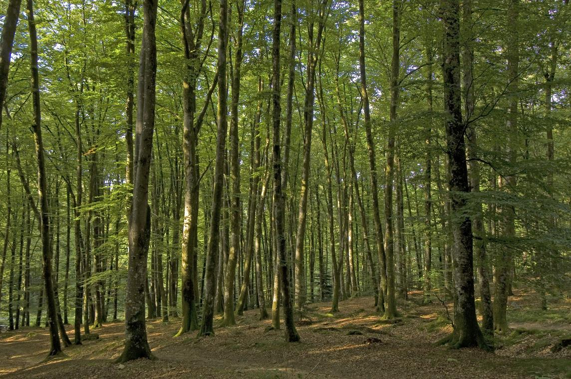 foret-chabrieres_3422.jpg