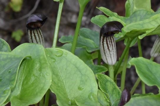 plantes.jpg