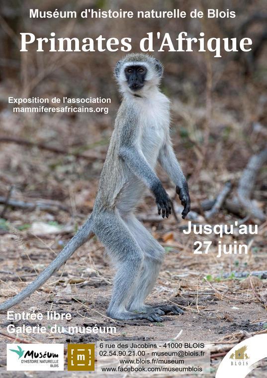 affiche_primate2.jpg