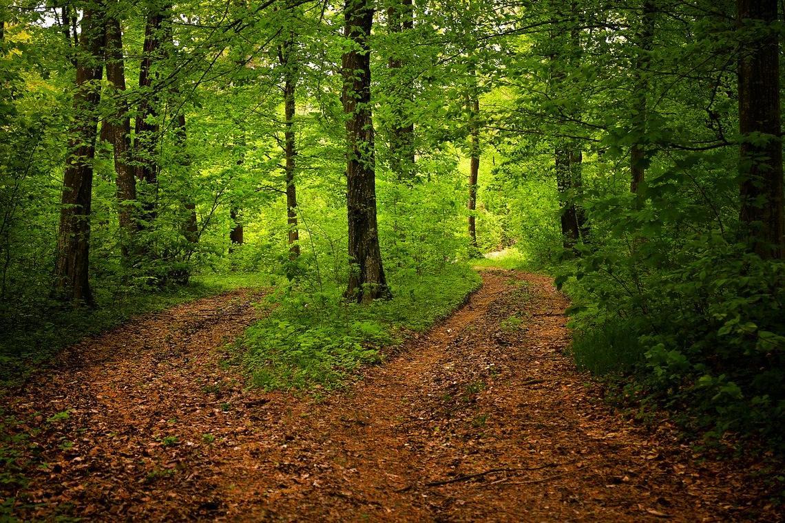 path-1345721_1280.jpg