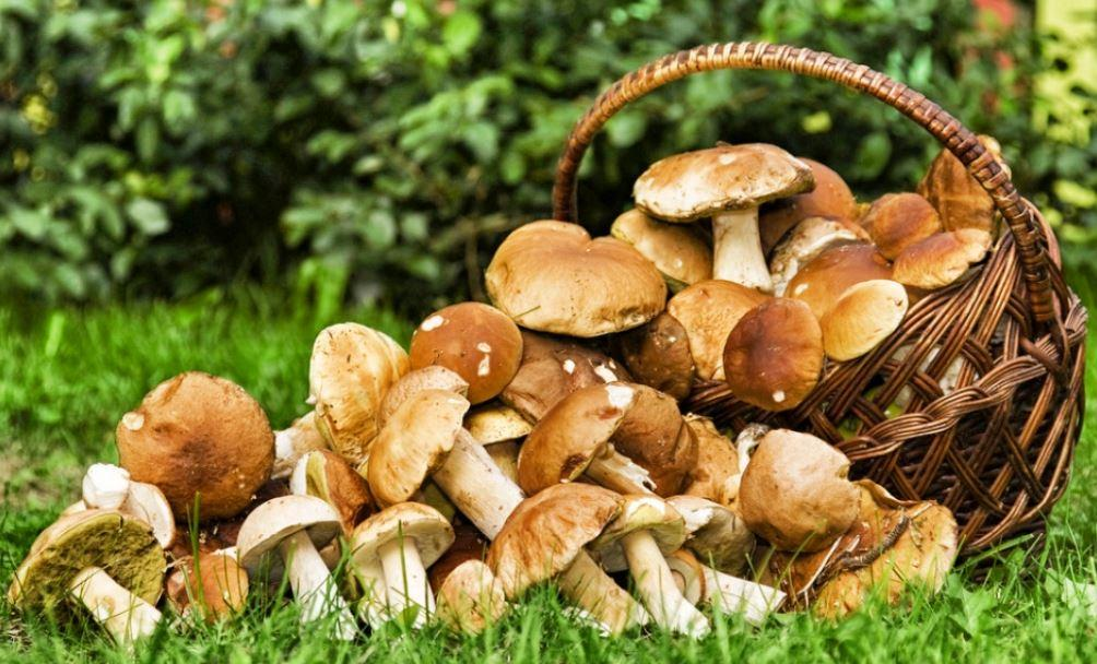 champignons-comestible-min.jpg