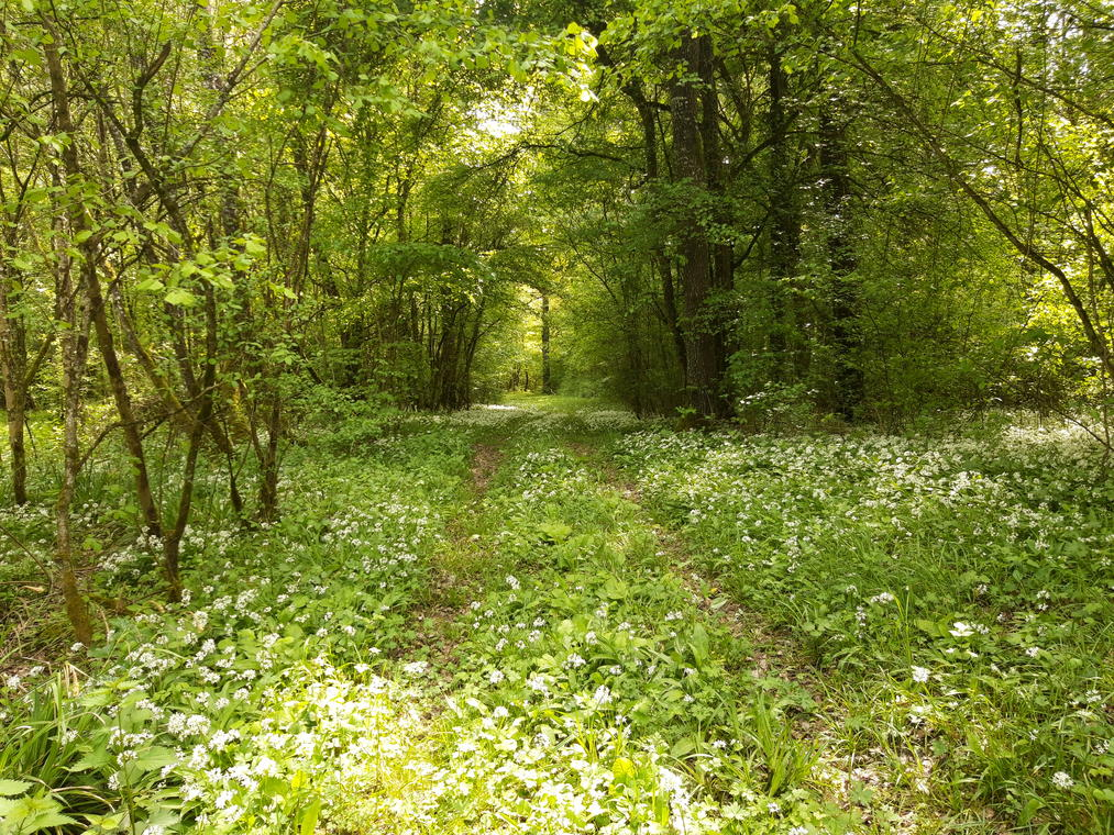 Forêt_PnrFO.jpg