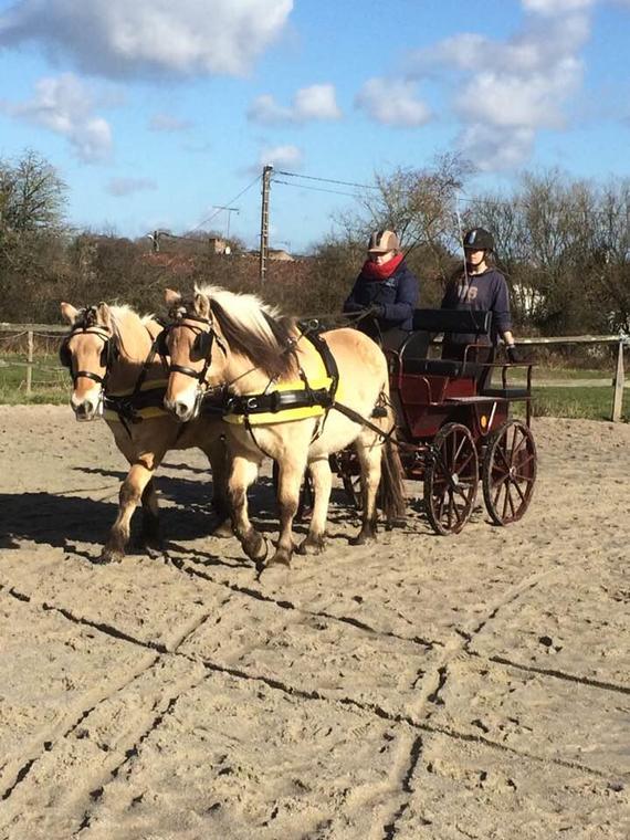 Les amis du cheval d'Asnières ©Amis du cheval.jpg