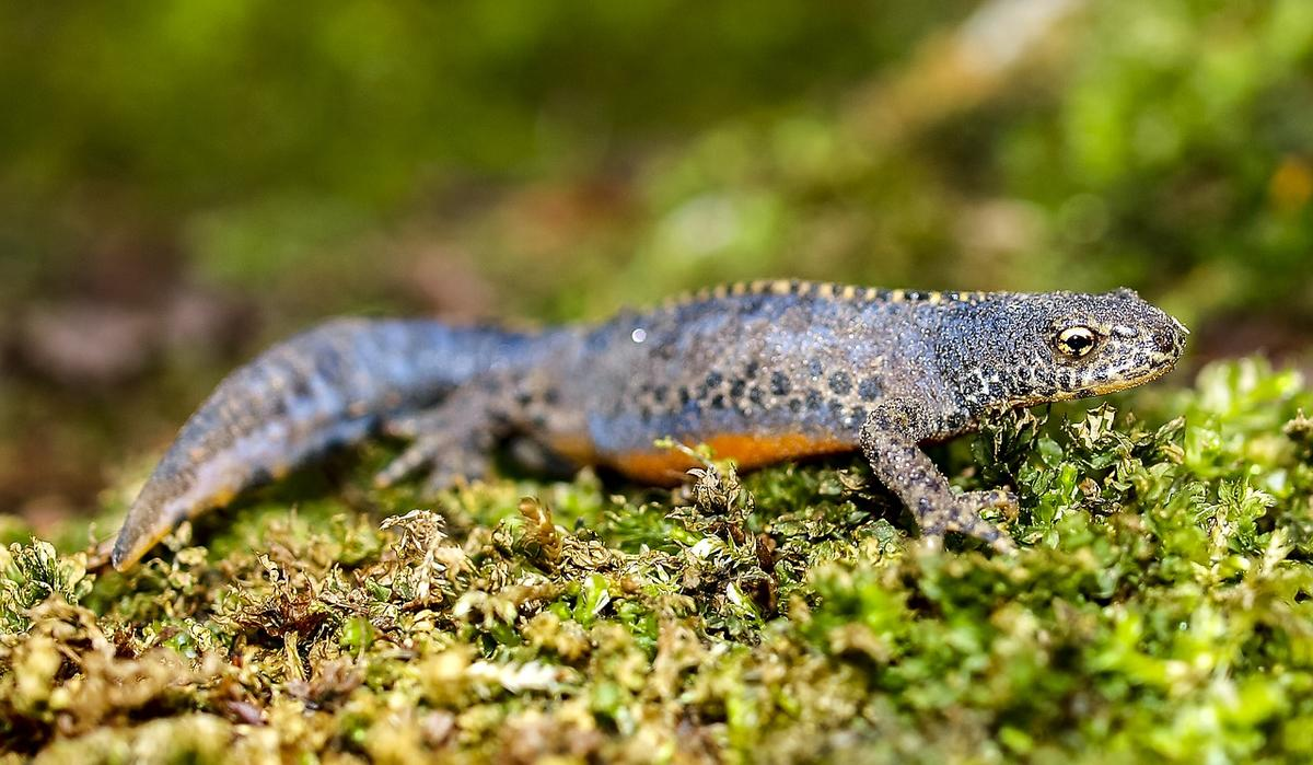 Reptiles et amphibiens.jpg