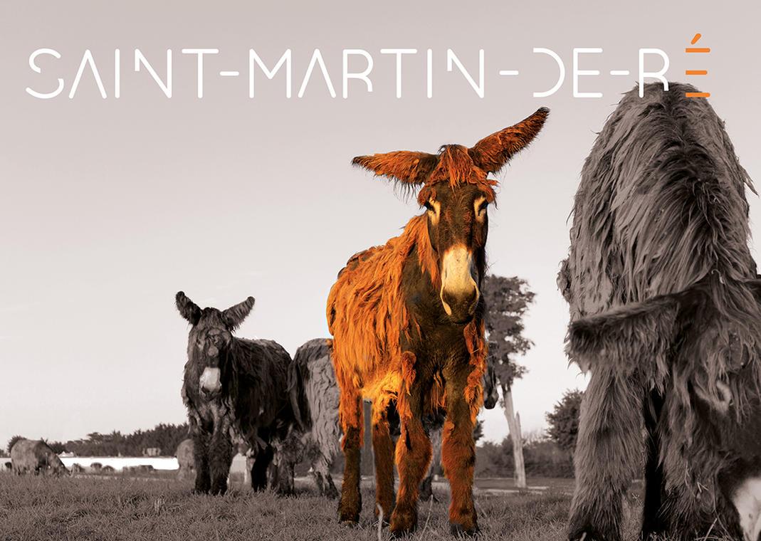 SAINT-MARTIN-DE-RE.jpg