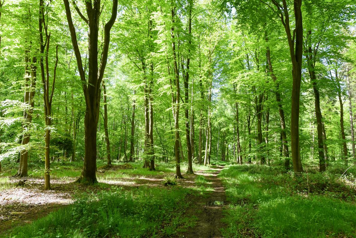 Forêt d'Arques-Pascal-Diologent-Ville-de-Dieppe.jpg