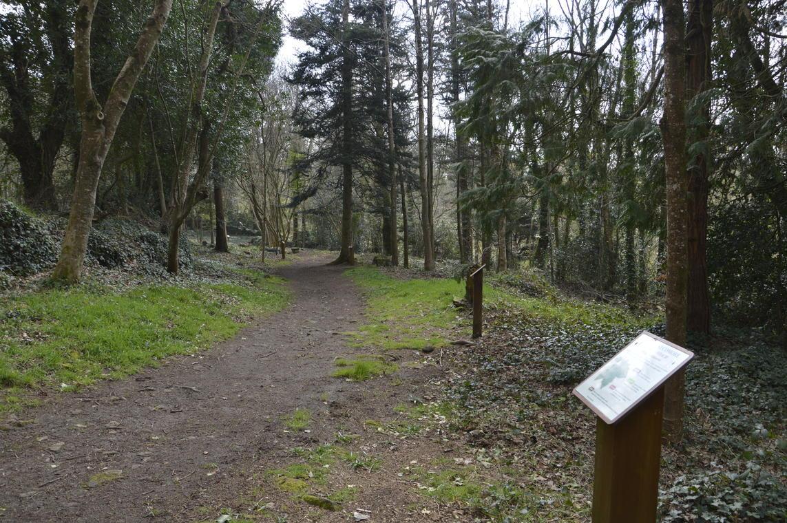 Sentier botanique - M Hamel (22).JPG