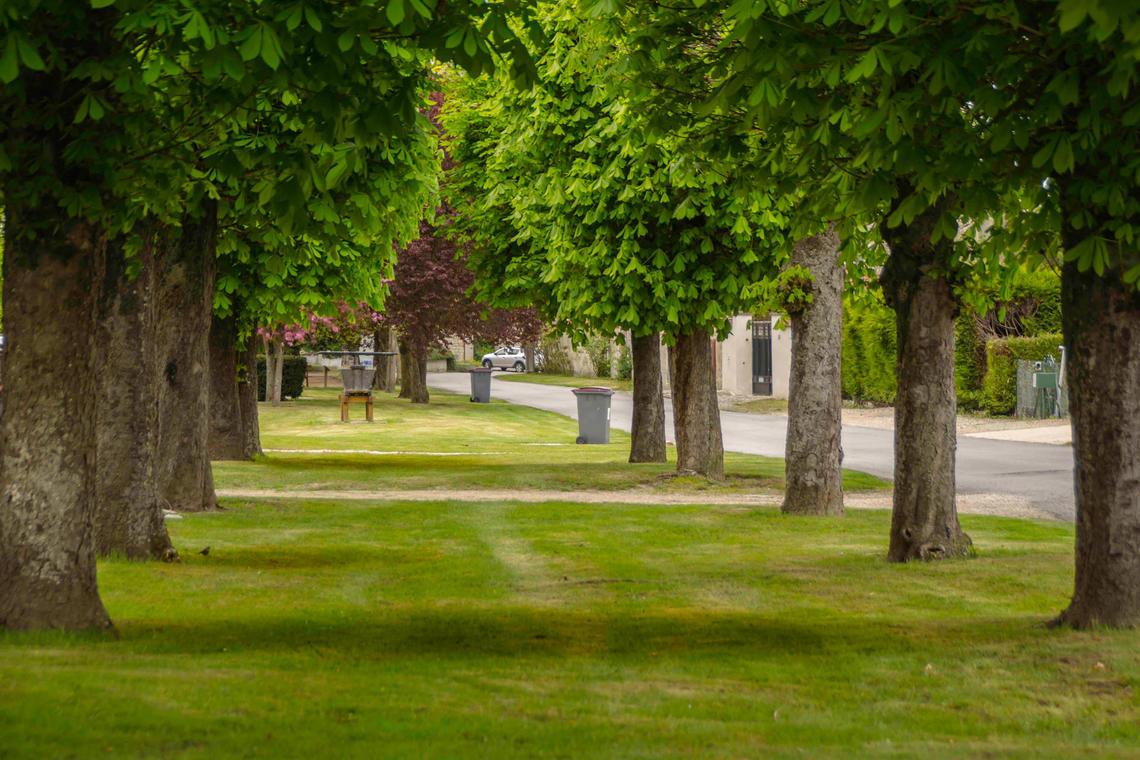 13.remparts-midi-arbres.jpg