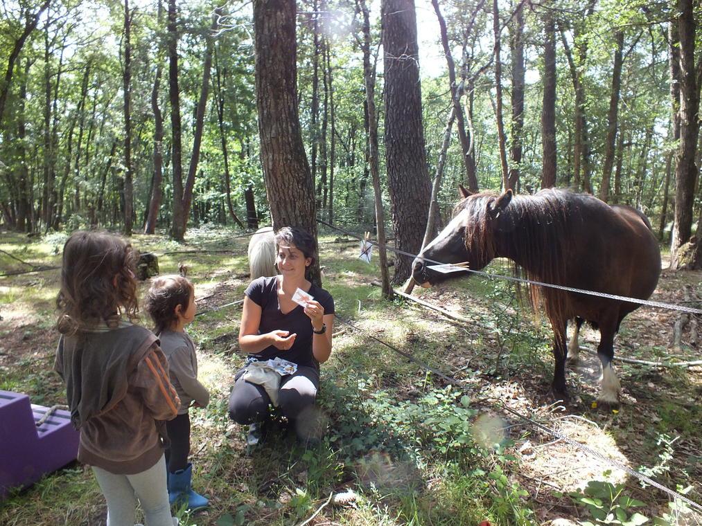 Atelier_enfant_Poney_qui_es_tu_Ferme_equestre_naturelle_les_Grillaults_La_Roche_Posay.JPG
