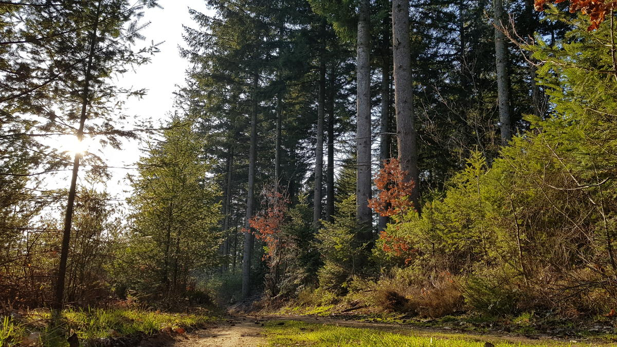 Forêt ©Lucie Vallet.jpg