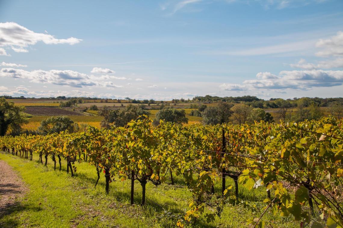 Vignes automne (2).jpg