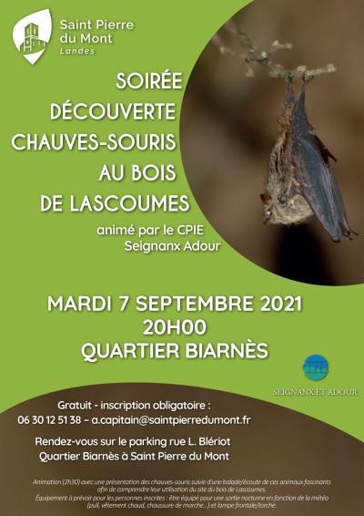Soirée_ChauveSouris.jpg