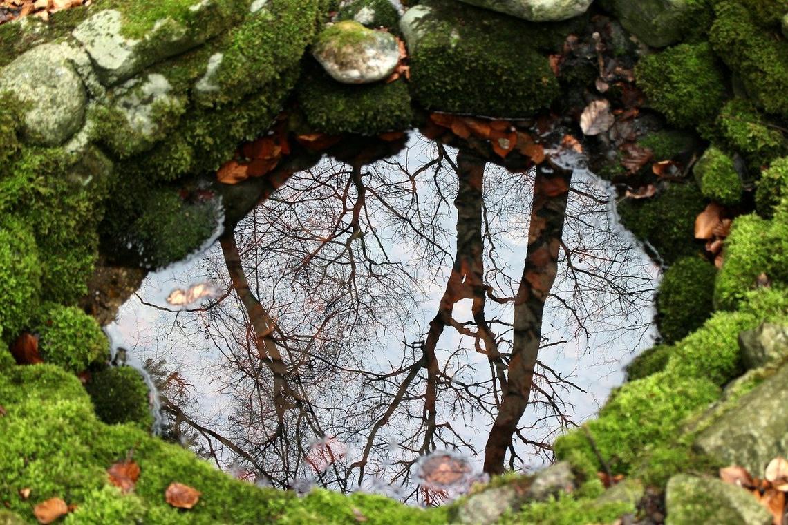nature-254951_1280.jpg