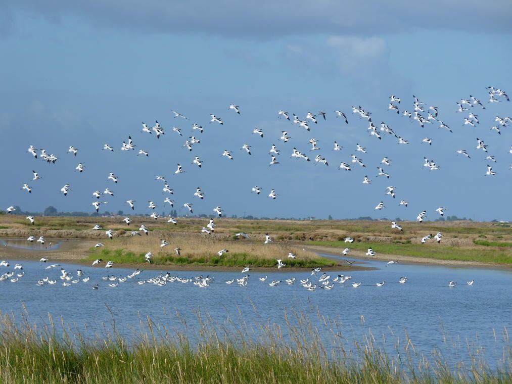 rochefort-ocean-oiseaux-marais©LPO.JPG