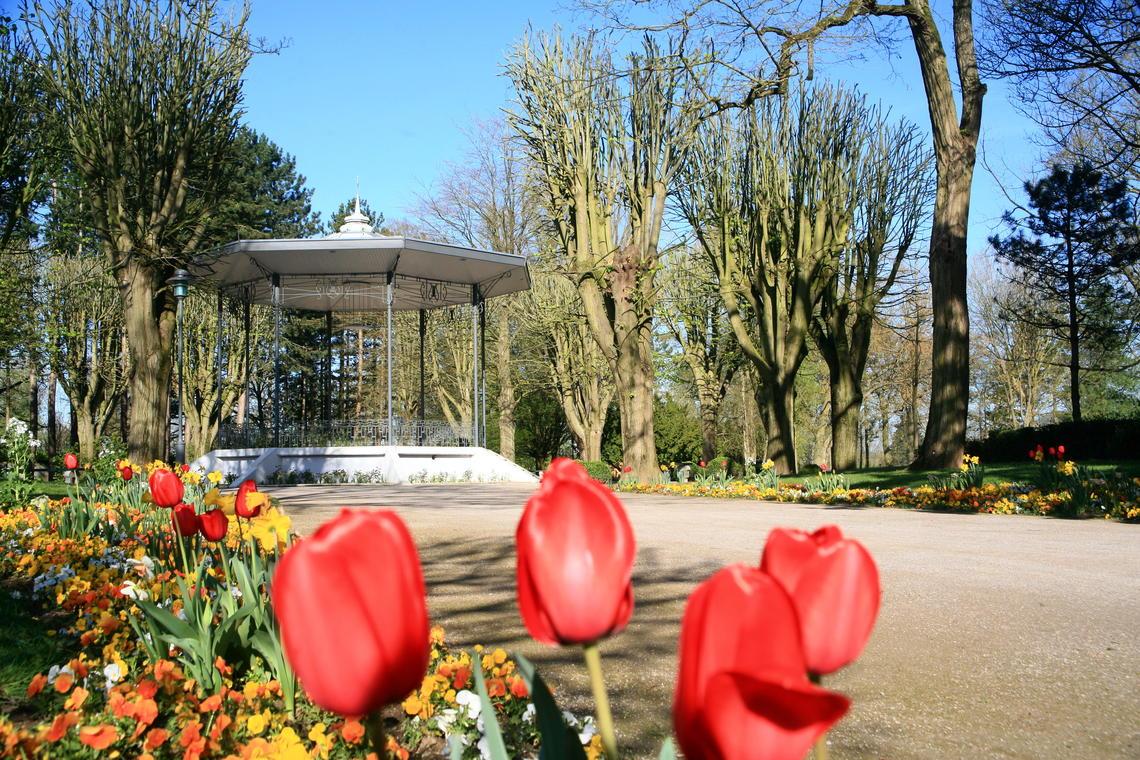 Stade-Parc (fleurs) (5).jpg