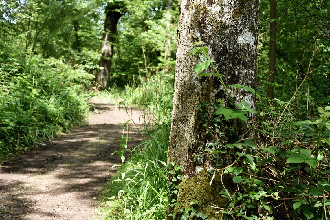 Forêt de Boulogne L. de Rocquignyè_OTBCO.jpg