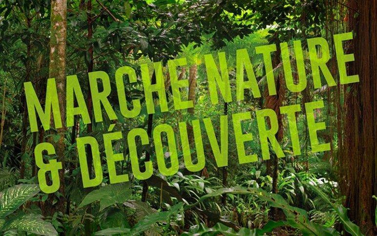 marche nature et découverte.jpg