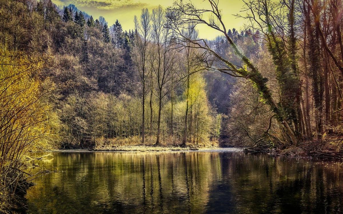 forest-3194475_1280.jpg