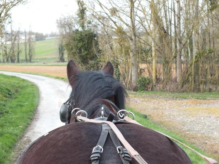 Circuit_nature_attelage_Ferme_equestre_naturelle_Les_Grillaults_La_Roche_Posay.jpg