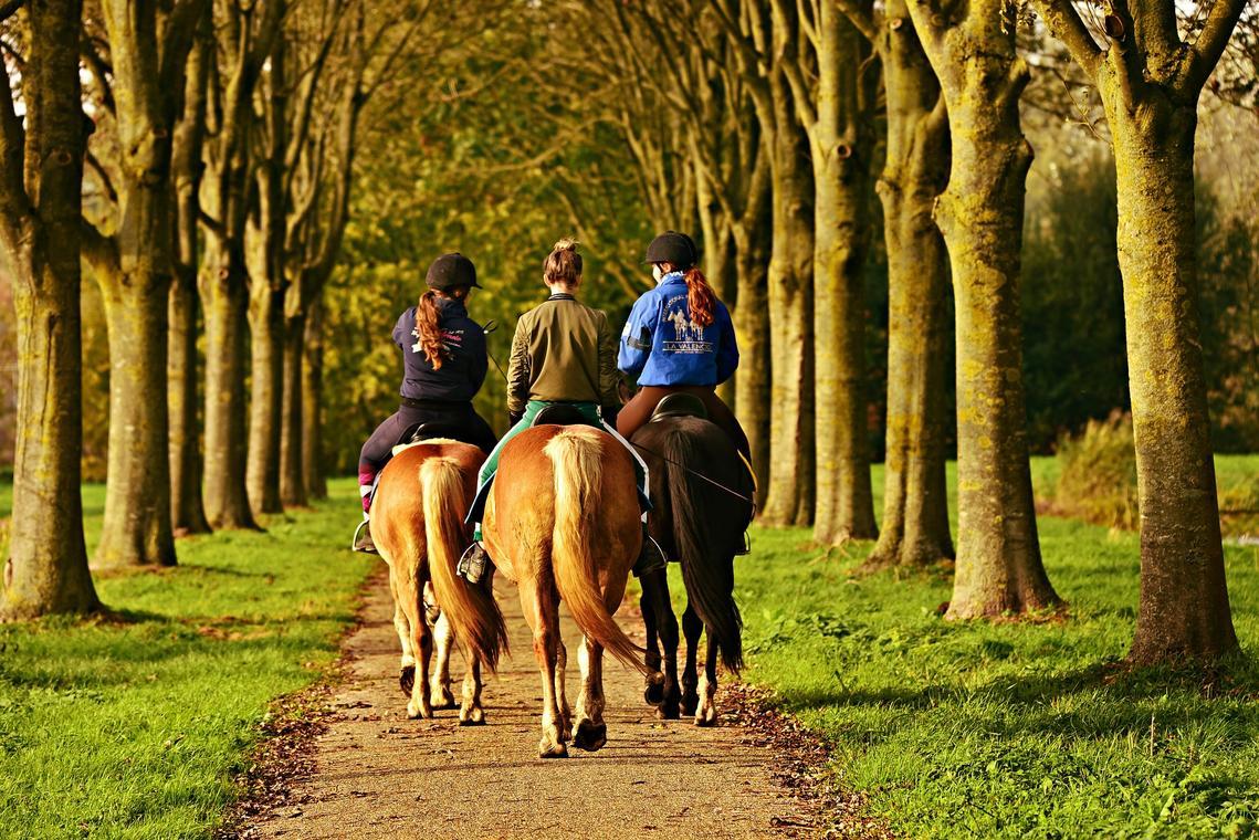 horse-rider-3807396_1920.jpg