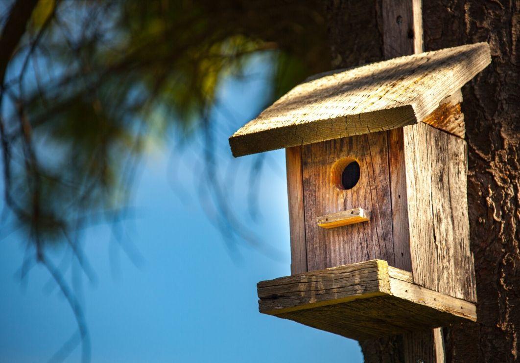 atelier création cabanes oiseaux.jpg