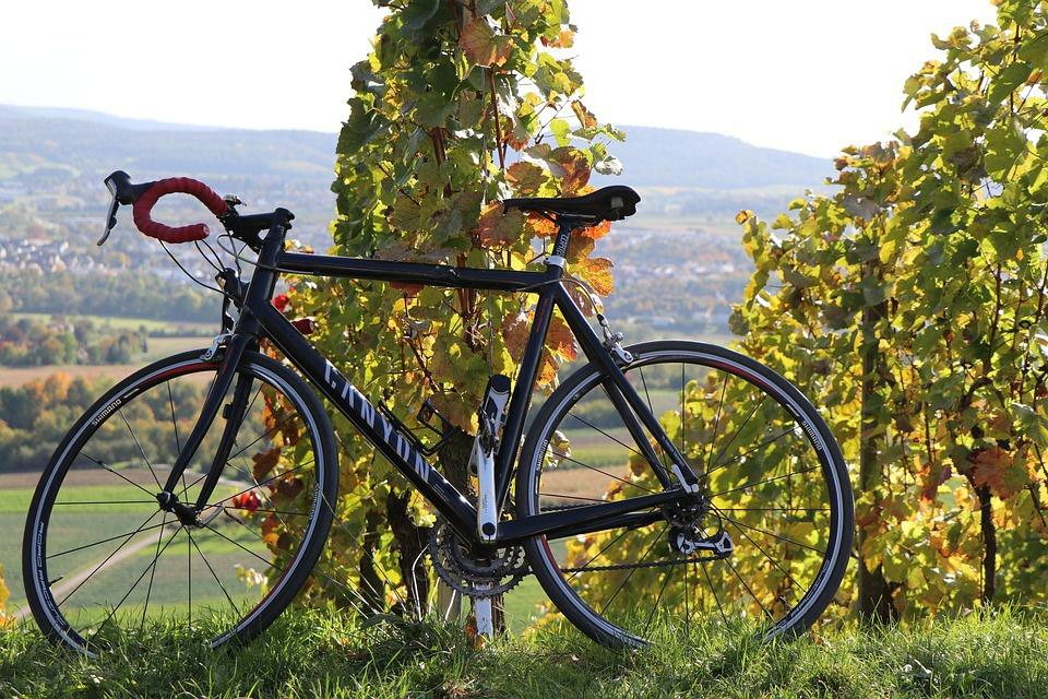 vélo dans le vignoble
