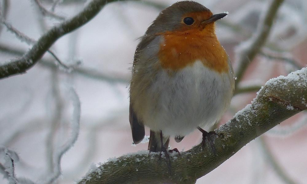 Trucs-et-astuces-pour-aider-les-oiseaux-l-hiver