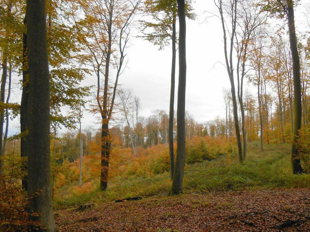 Forêt de Retz < Aisne < Picardie