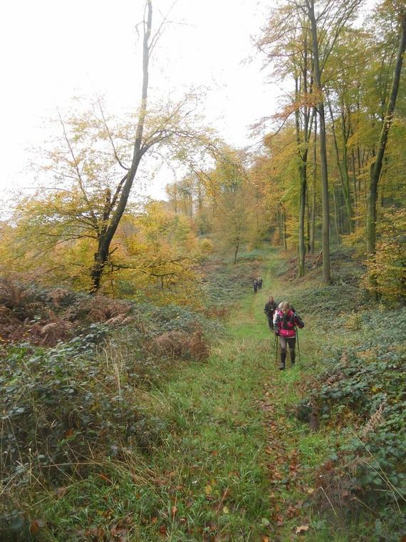 Forêt de Retz < Marcheurs < Aisne < Picardie