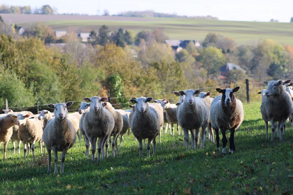 La bergerie < Montloué < Thiérache < Aisne < Hauts-de-France