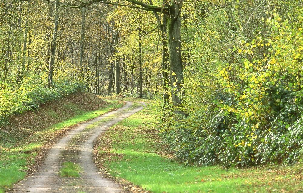 En chemin dans le bois d'Holnon