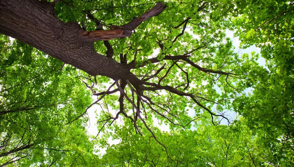 Bel arbre