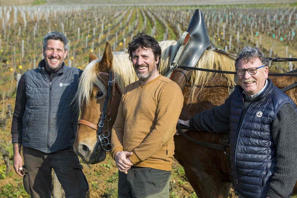 Saint Sernain du Plain - Domaine Chevrot - Oenologie - Viticulteurs - Dégustations @Th Gaudillère rd