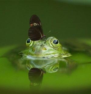 frog-540812_640