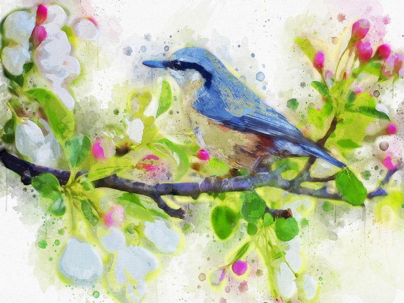 spring-bird-2851893_960_720