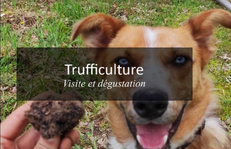 Trifficulture