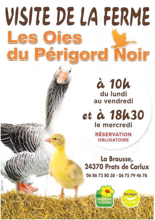 Visites à la ferme Oies du Périgord Noir