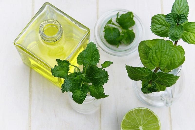 plantes-medicinales-12