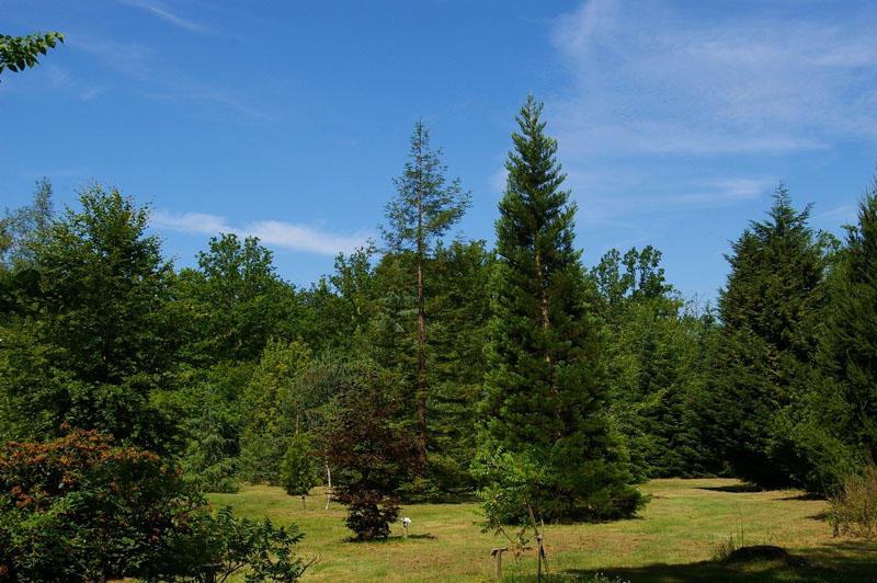 Arboretum de La Ferté Vidame