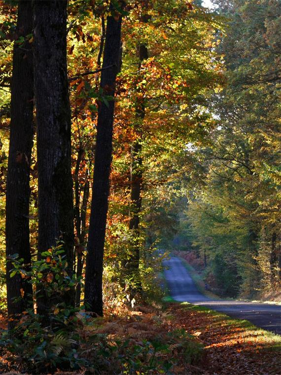 En forêt domaniale - Senonches