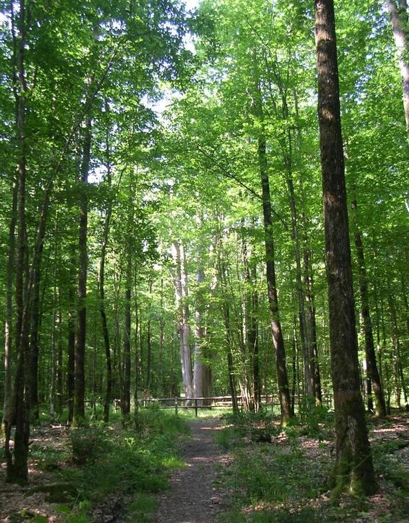 Forêt domaniale de Senocnhes