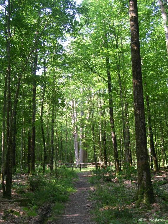 Forêt de Senonches, vallée de l'Eure