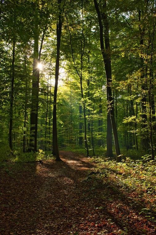 Forêt de Senonches Portrait